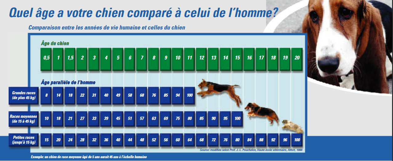 Age chien homme