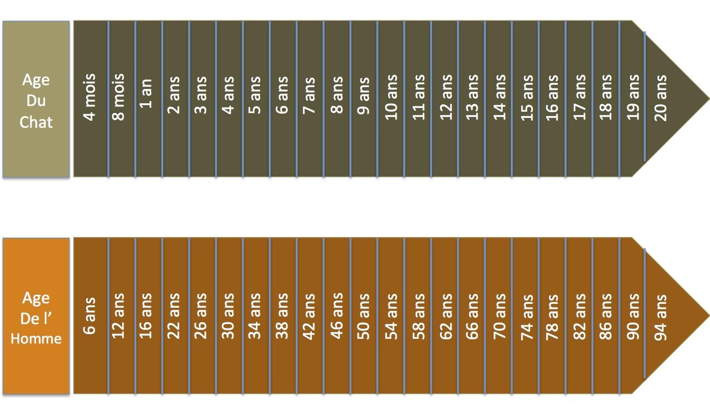 Comparaison des ages e1375437002245
